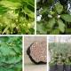 Ensemble de Plants Truffiers Melanosporum - 8 m²