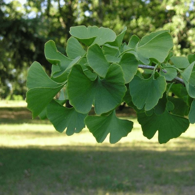 arbre aux écus