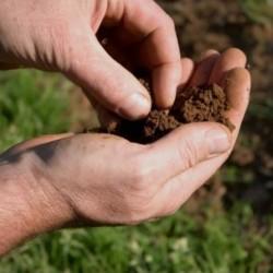 Kit analyse de sol en laboratoire pour plant truffier - Pépinières Naudet