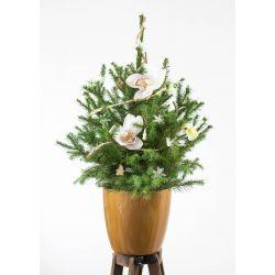 Sapin naturel en pot - Le fleuri (30 à 65cm)