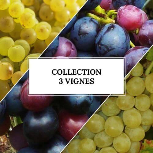 Collection 3 Vignes