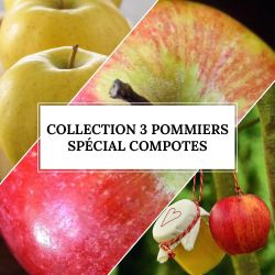 Collection 3 Pommiers Spécial Compotes