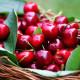 """Cerisier """"Belle Magnifique"""" (Prunus Cerasus """"Belle Magnifique"""")"""